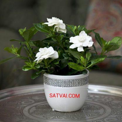 Nayantara White