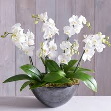 Orchid Flower Price In Bangladesh All Plant Home Delivery