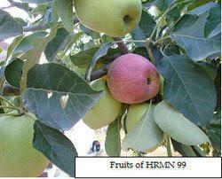 hrmn 99 apple